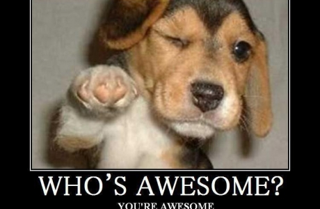 totally awesome dog
